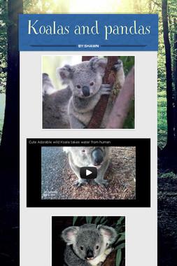 Koalas and pandas