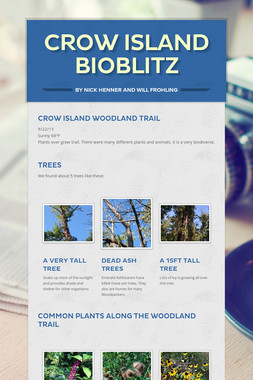 Crow Island Bioblitz