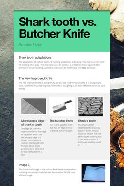 Shark tooth vs. Butcher Knife