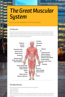 The Great Muscular System
