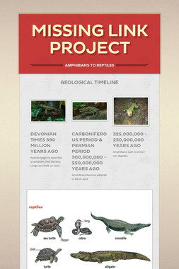 Missing Link Project