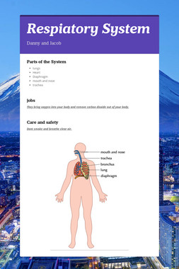 Respiatory System