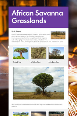 African Savanna Grasslands