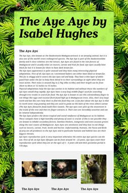 The Aye Aye by Isabel Hughes