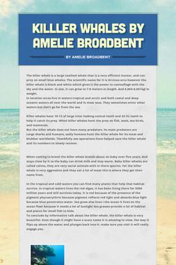 killler whales by Amelie Broadbent