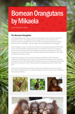 Bornean Orangutans by Mikaela