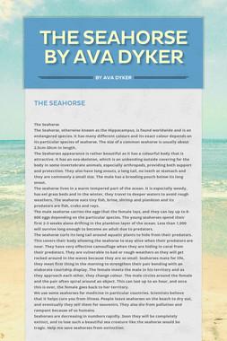 The Seahorse By Ava Dyker