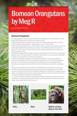 Bornean Orangutans by Meg R