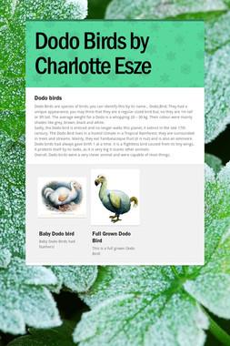 Dodo Birds by Charlotte Esze