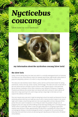 Nycticebus coucang