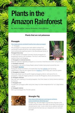 Plants in the Amazon Rainforest