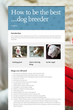 How to be the best ....dog breeder