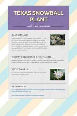 Texas Snowball Plant