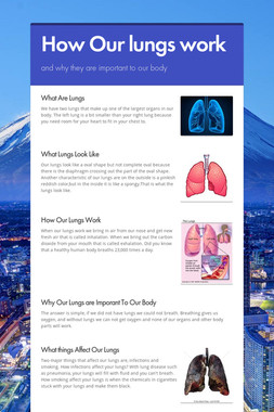 How Our lungs work