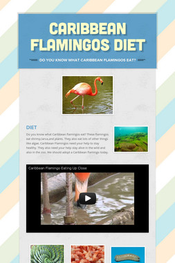 Caribbean Flamingos Diet