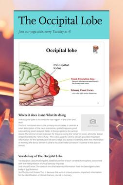 The Occipital  Lobe