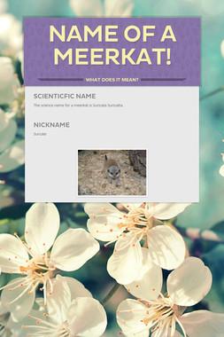 Name of a Meerkat!