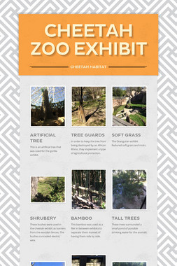 Cheetah Zoo Exhibit
