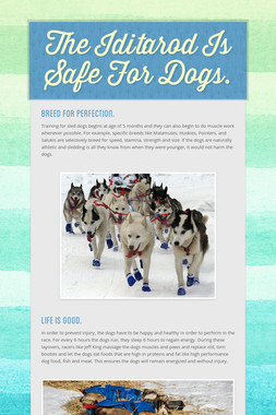 The Iditarod Is Safe For Dogs.