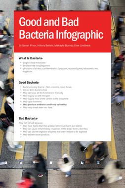 Good and Bad Bacteria Infographic