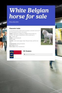 White Belgian horse for sale