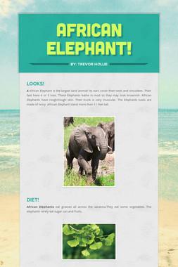 African  Elephant!