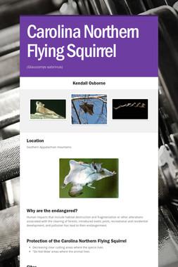 Carolina Northern Flying Squirrel