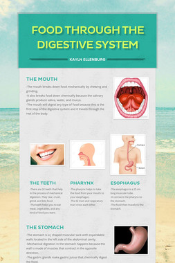 Food Through the Digestive System