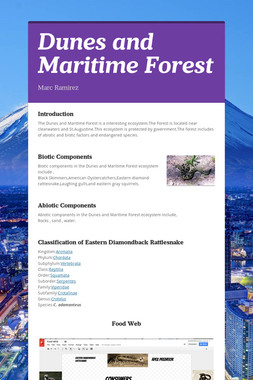 Dunes and Maritime Forest