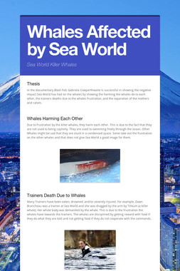 Whales Affected by Sea World
