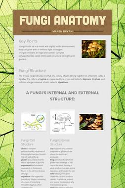 Fungi Anatomy