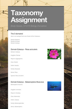 Taxonomy Assignment