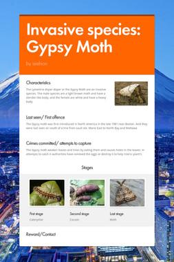Invasive species: Gypsy Moth