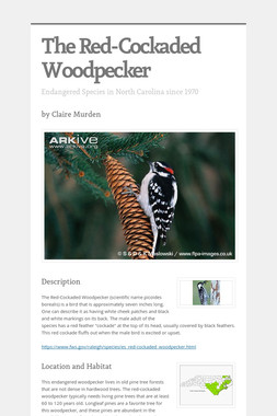 The Red-Cockaded Woodpecker
