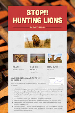 STOP!! Hunting Lions
