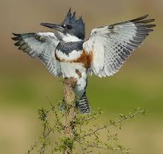 Birds from Arkansas