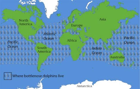 where do dolphins live?