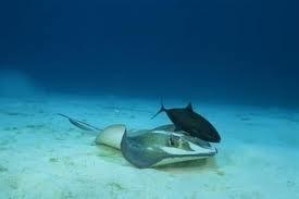 predator and prey relationship of ocean biome