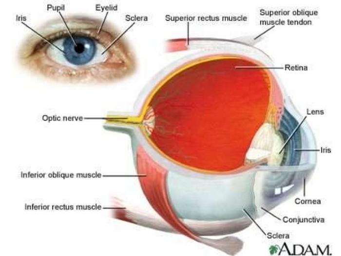 How do you get retinoblastoma?
