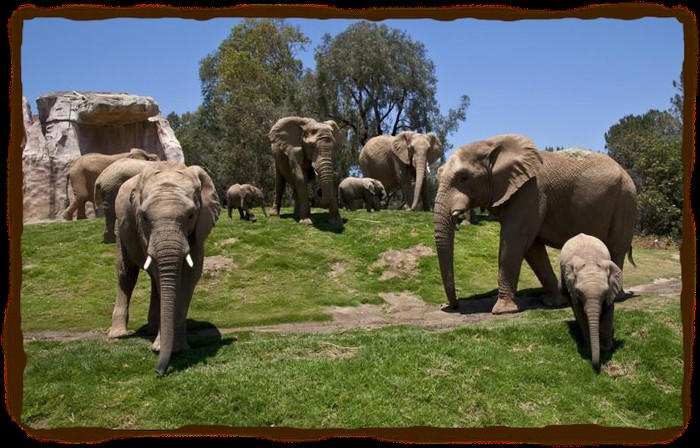 elephant habitat Amazing and true elephants facts and information for children elefacts.