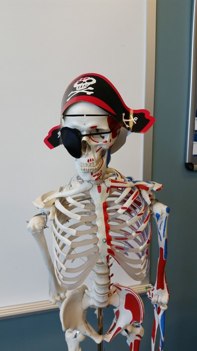 Free Anatomy & Physiology Tutoring! | Smore Newsletters for Education