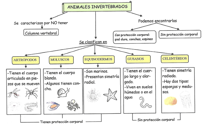 ANIMALES INVERTEBRADOS | Smore Newsletters