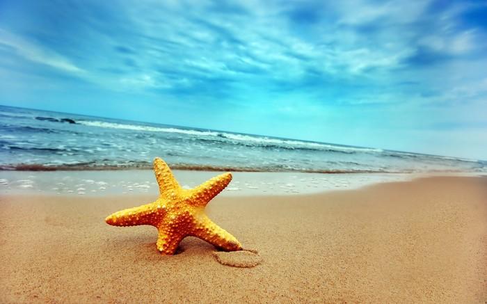 SeaStar -