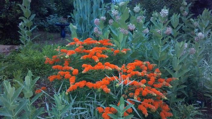Sparks Flowers | Sparks Florist: Product Details