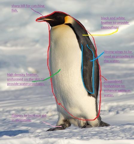 Baby Penguin Diagram Electrical Work Wiring Diagram