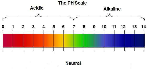 pH levels of the bases