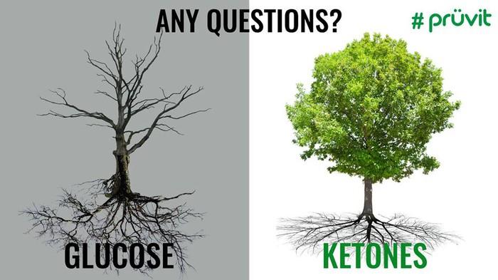 「ketone neuroprotective」の画像検索結果