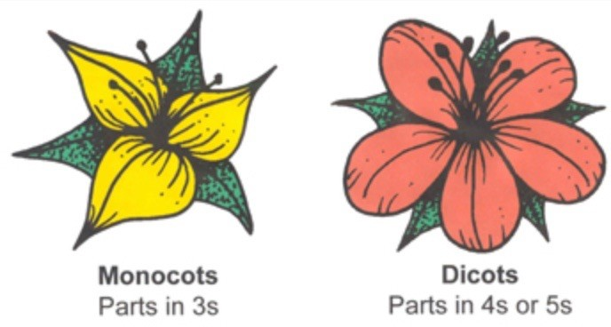 Monocot And Dicot Smore Newsletters
