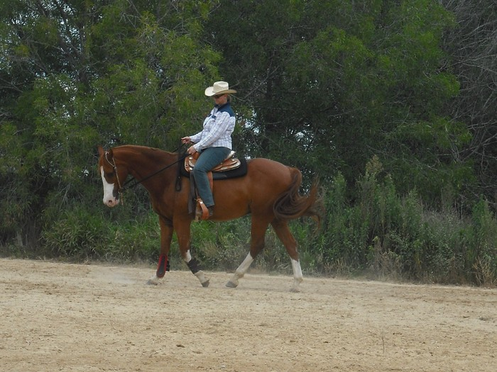 Western Performance and Hunter under Saddle Clinic