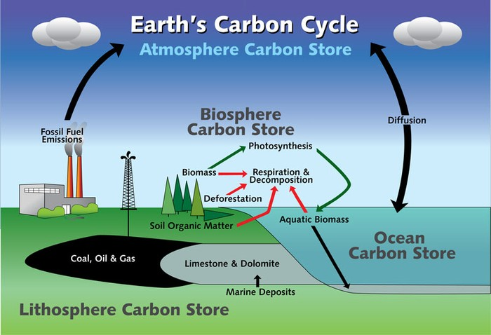 7th grade science the carbon cycle the water cycle ccuart Image collections